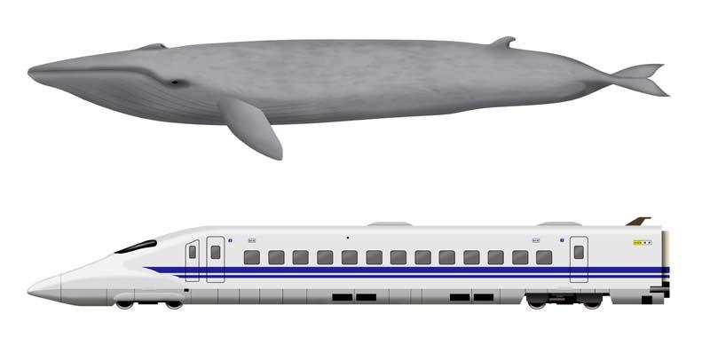 illustration/Official Works
